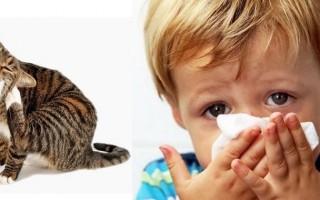 Аллергия на кошку у ребенка: симптомы и лечение