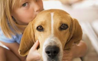 Аллергия на собаку у ребенка: симптомы, что делать