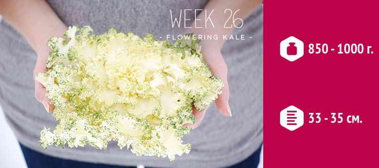26 неделя беременности развитие плода