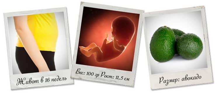 16 неделя беременности ощущения в животе,