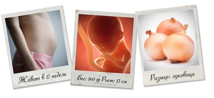 Узнайте все о том, как проходит развитие плода на сроке 17 акушерских недель беременности.