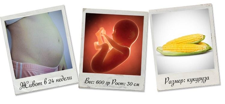 Узнайте, каким в норме должен быть вес ребенка на 24 неделе беременности.