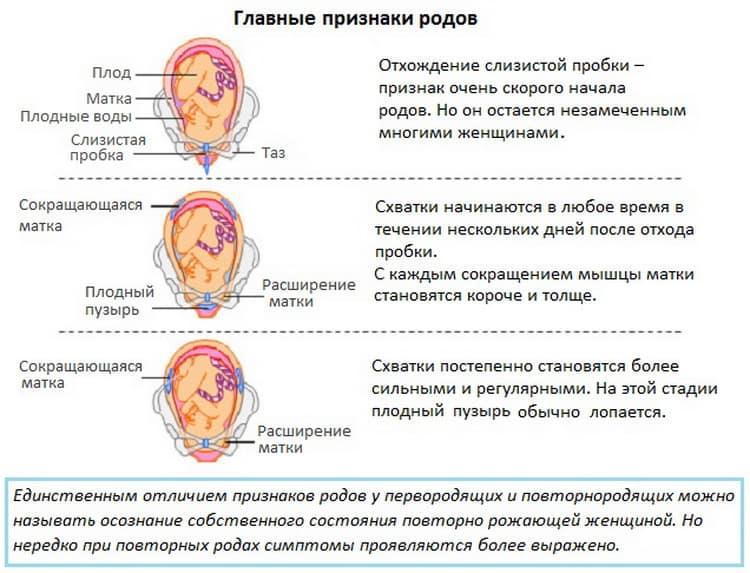 Почему в 37 недель беременности каменеет живот,