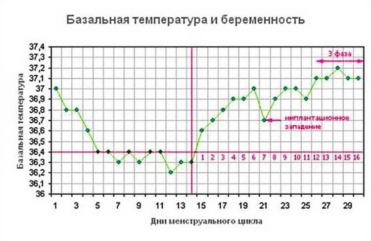 Чтобы проверить беременность в домашних условиях без теста, базальную температуру надо измерять на протяжении практически всего менструального цикла.