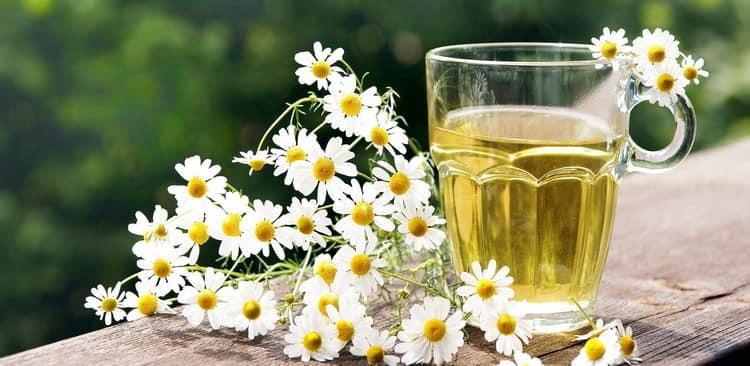 какие следует принять меры предосторожности при питье чая с ромашкой при беременности