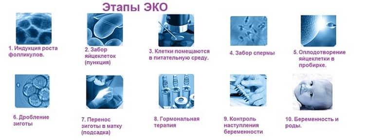 Как подготовится к переносу эмбрионов
