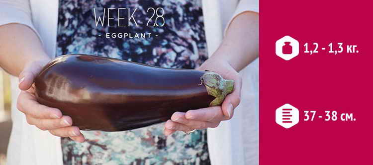 28 неделя беременности
