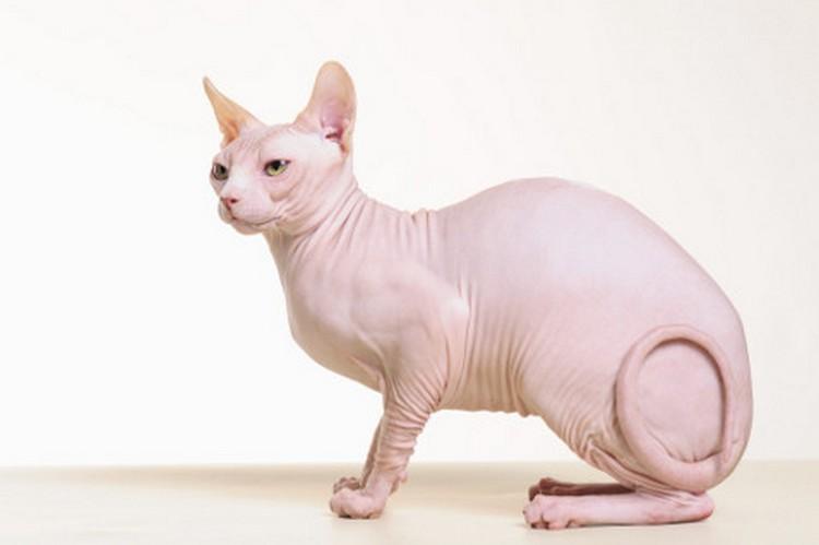 Поговорим о том, как проявляется аллергия на кошек у ребенка.