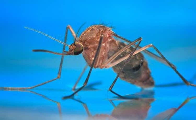 аллергия на комариные укусы у ребенка
