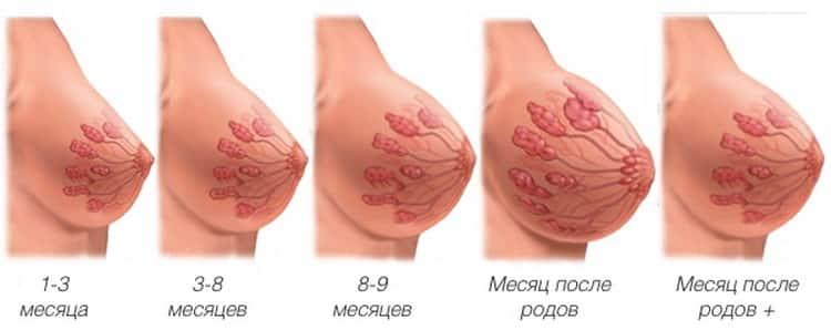 Все о том когда начинает болеть грудь при беременности