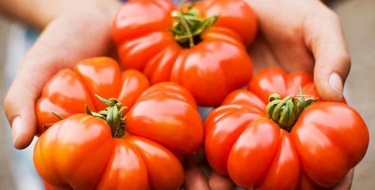 Можно ли помидоры при грудном вскармливании