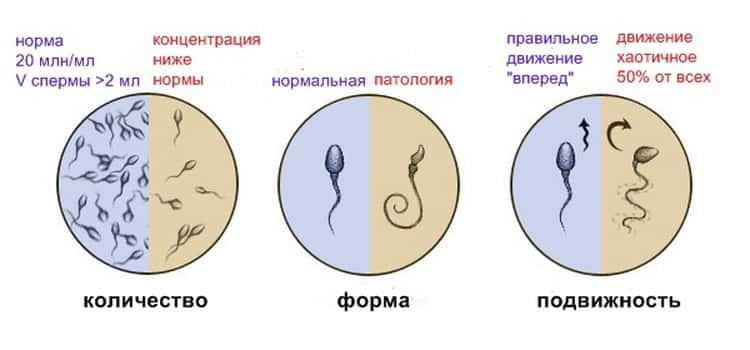 Улучшить качество спермы рекомендации правы