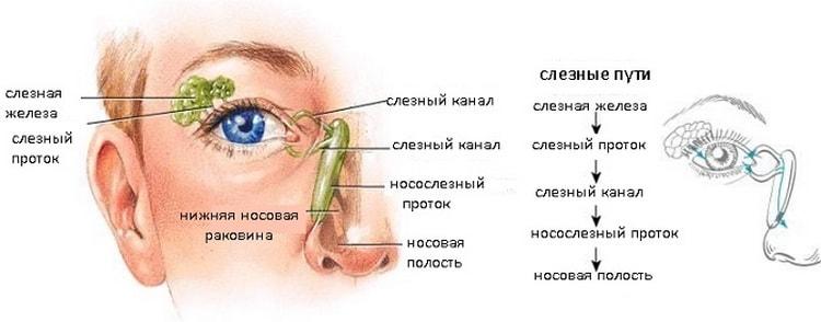 Так выглядит строение слезного аппарата у здорового человека.