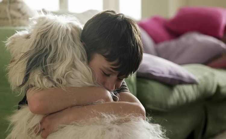 Профилактика аллергии на собак у ребенка