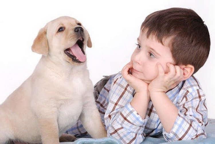 Все о том как проявляется аллергия на собак у детей