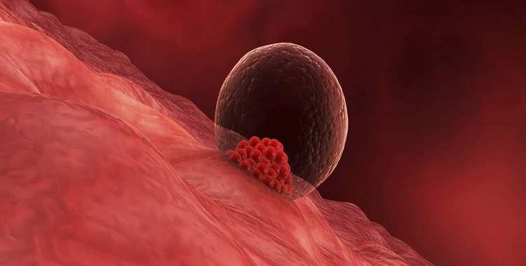 Имплантация эмбриона – что это и когда ее ждать