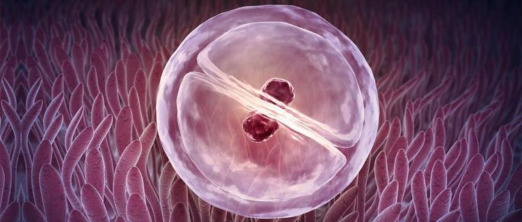 Имплантация эмбриона происходит обычно на 7-10 день после овуляции.