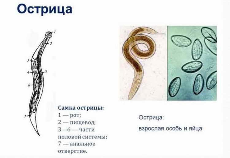 острицы у детей симптомы и лечение