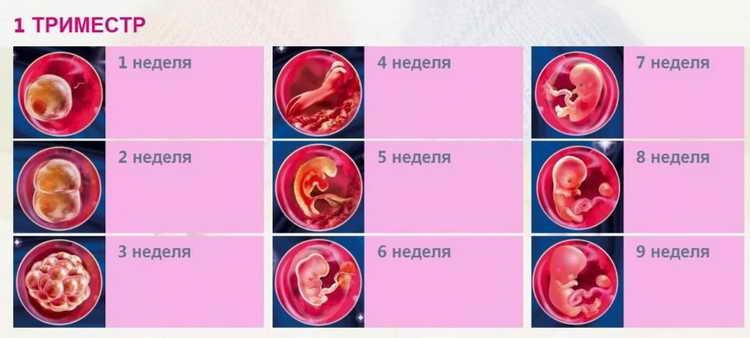 гексикон при беременности 1 триместр