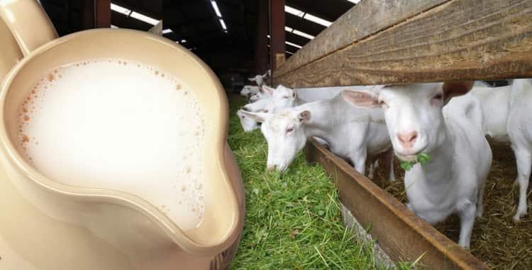 С какого возраста можно давать козье молоко грудничку