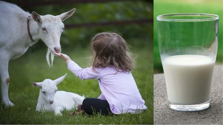 козье молоко для грудничка с какого возраста