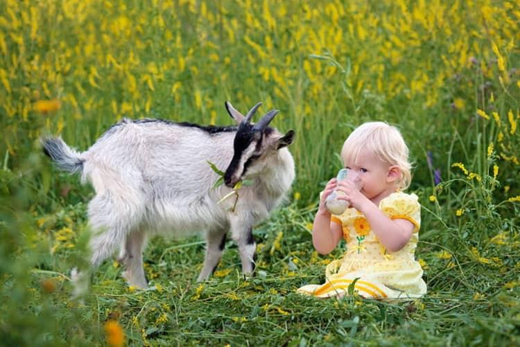 козье молоко польза для детей